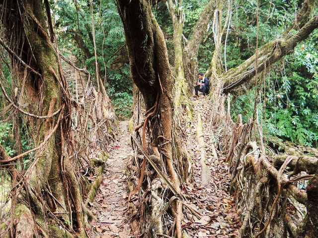 This is double living root bridge