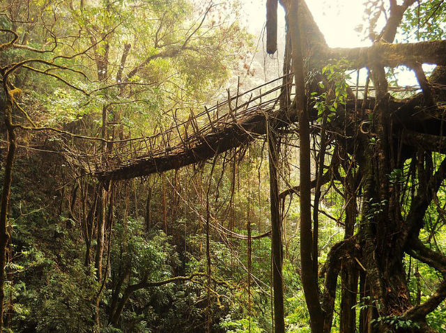 Nature S Marvel Living Root Bridges Of Cherrapunji