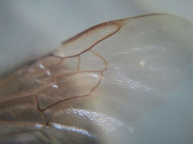 Image Taken by Micro Phone Lens