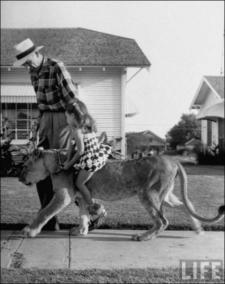 """Blondie"" lion as a pet , in 1955"