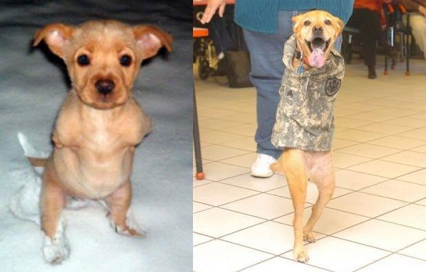 Faith the two legged puppy