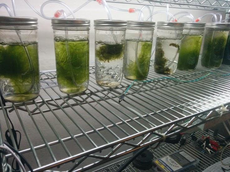 Algae Based Battery