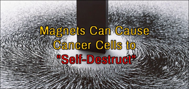 Scientists In Korea Have Found Magnets To Be A Cure For Cancer
