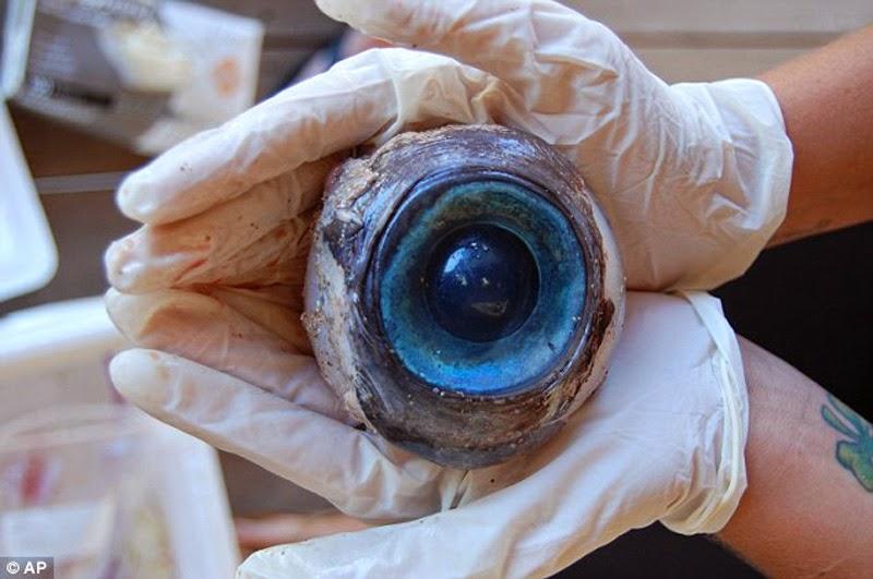 Giant Eyeball