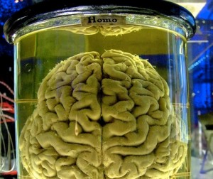Brain in the Vat