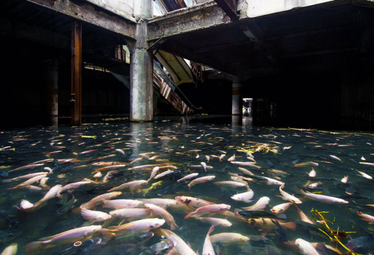 abandoned mall in Bangkok, Turned in to urban aquarium