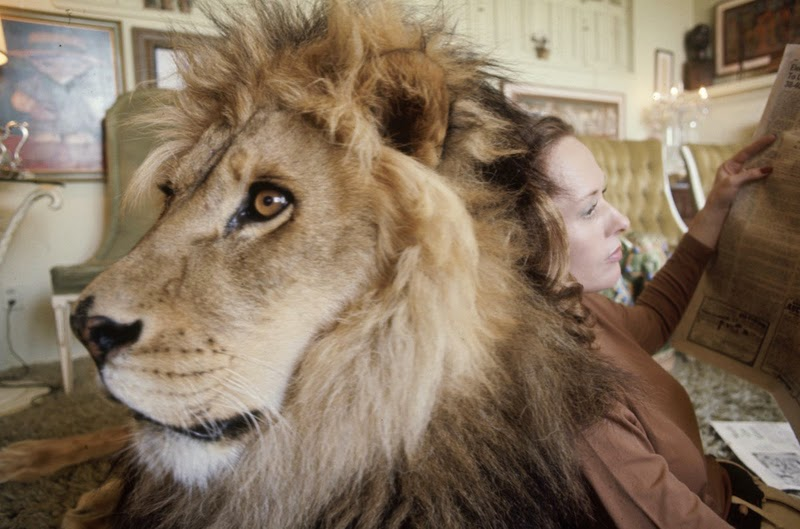 Neil the lion with Hedren as she reads a newspaper