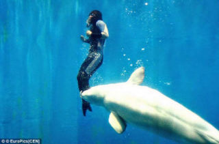 A beluga whale saved a divers life