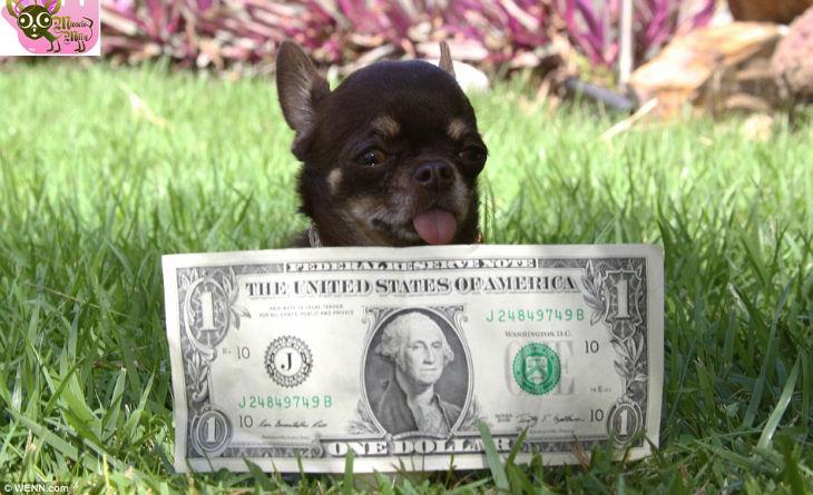 Smallest dog1