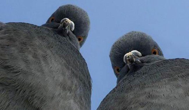 Anal check for birds in China