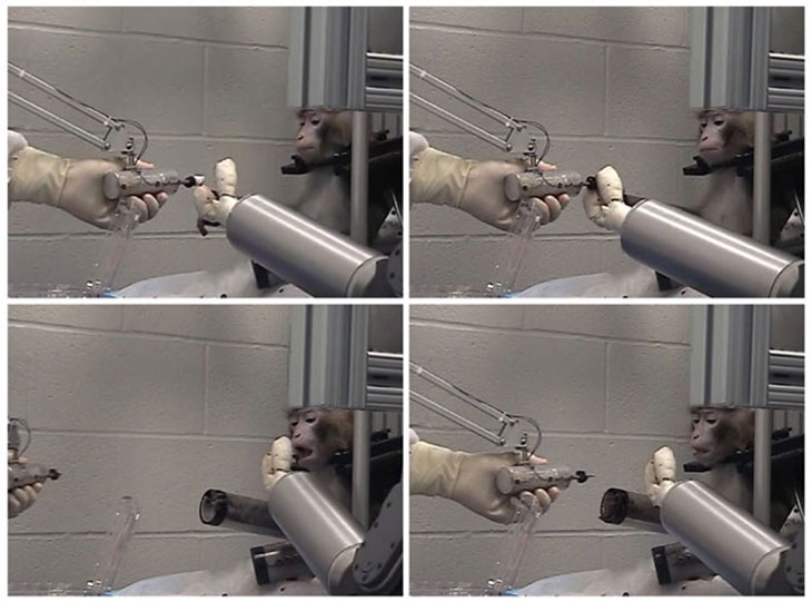 Robot Monkeys