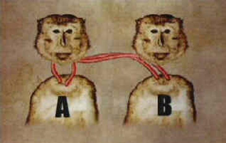 monkey heads