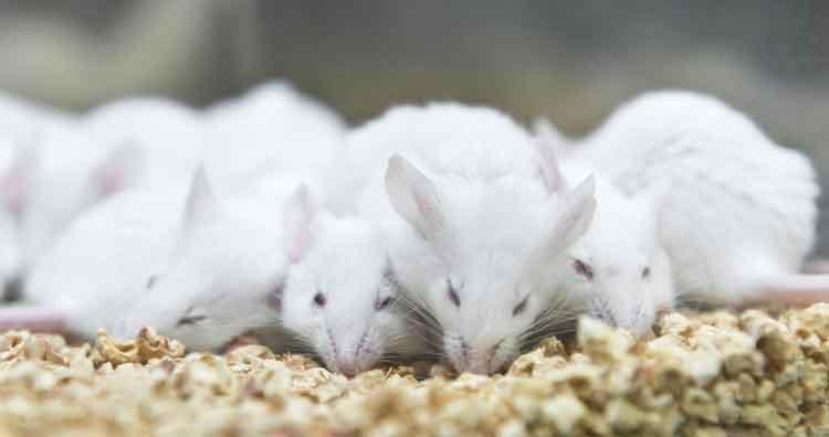 Rats on Ecstasy
