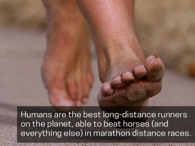 Humans are the best long-distance runners on the planet
