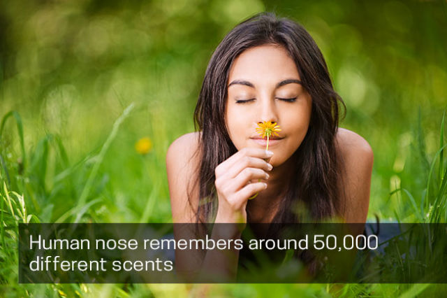 Nose remembers 50,000 Different Scents