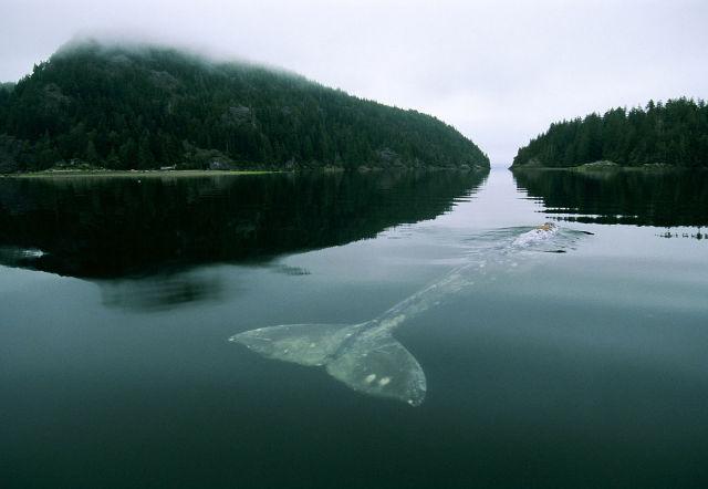 52-hertz whale