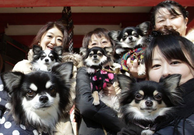 There are more pets than children in Japan.