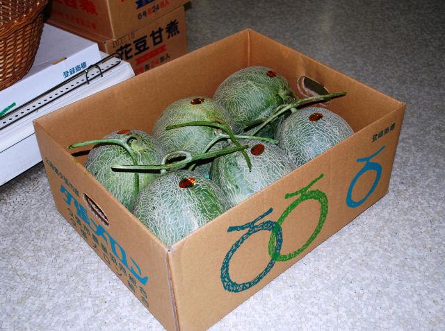 Japanese Yubari King cantaloupe