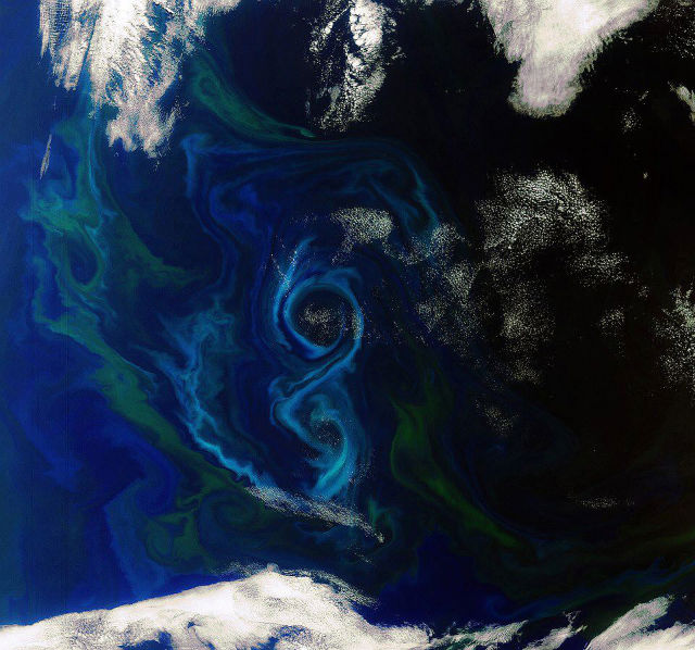 Phytoplankton as seen from space