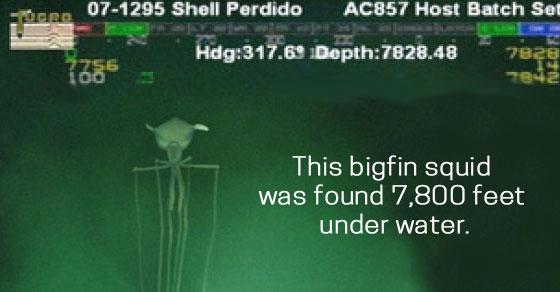 ocean-facts
