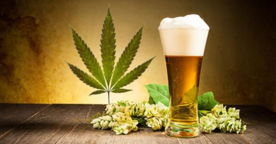 Beer and marijuana are related