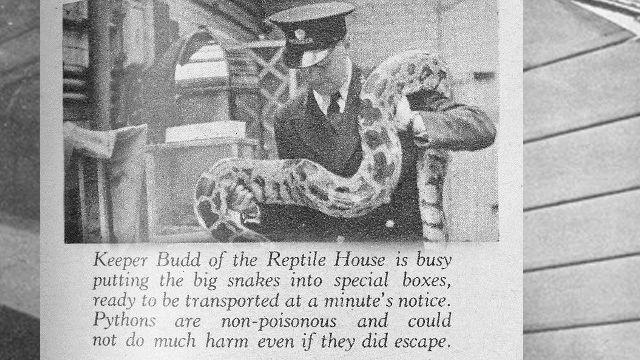 London Zoo during World War 2