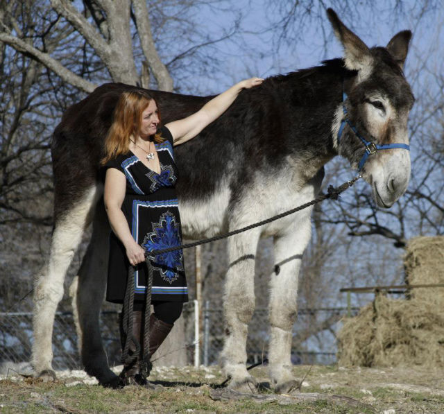 Romulus, the world's biggest donkey