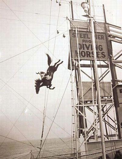 Steel pier horse diving