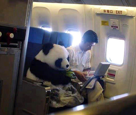 Pandas are on loan from china