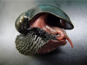 The iron Snail