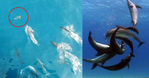 11 facts about dolphins that prove they are evil - Pics Of Dolphins