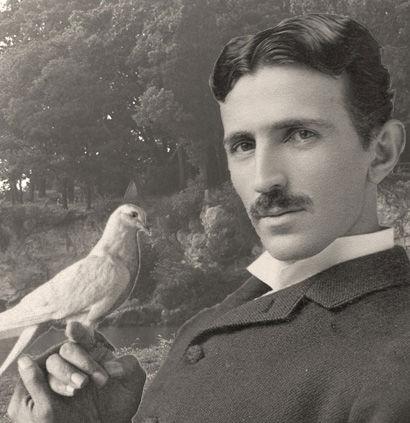 Teslas Pigeon love