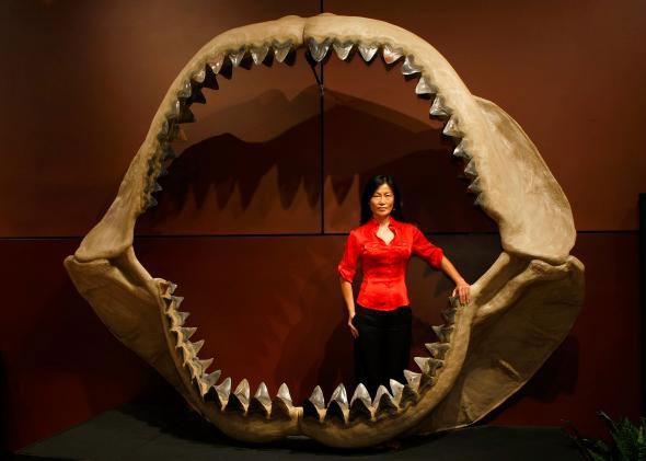 Megalodon sharks size