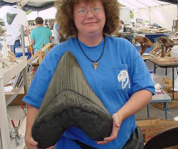 Megalodon shark's tooth