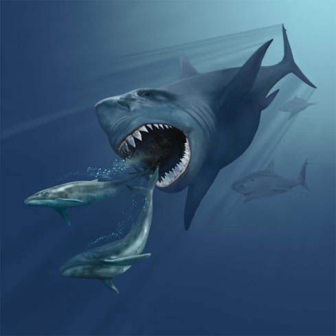 Megalodon, the great predator