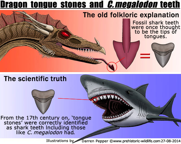 Megalodon tongues