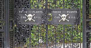 Poison Garden gate