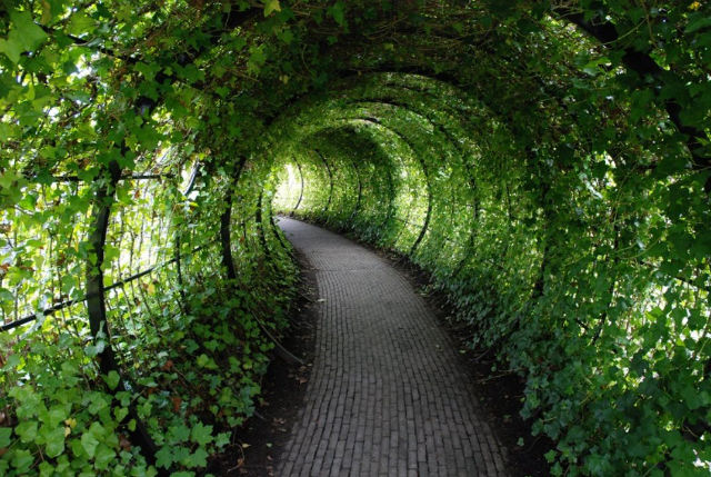 Walk though tunnel to Poison Garden