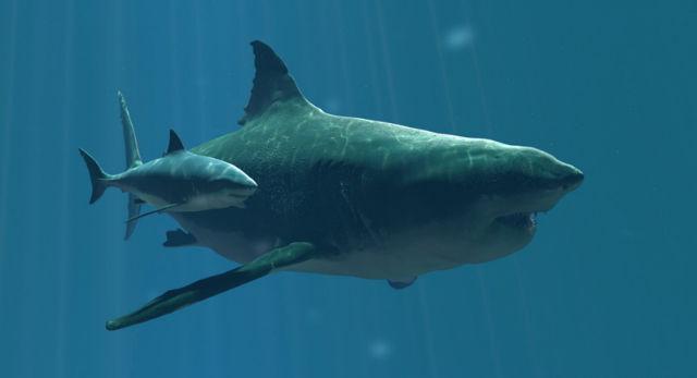 megalodon vs great white shark