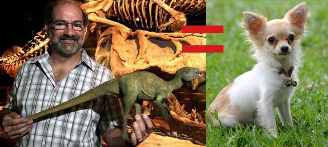 chihuahua size dinosaurs