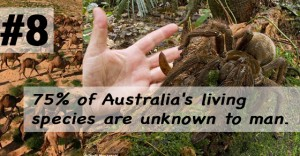 wtf facts about Australia