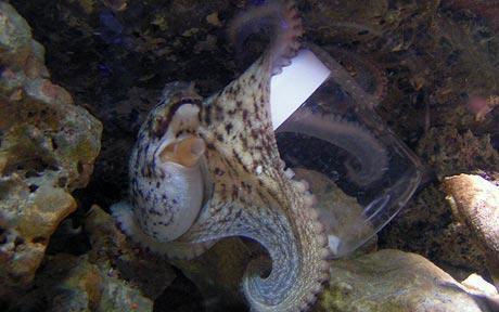 otto octopus