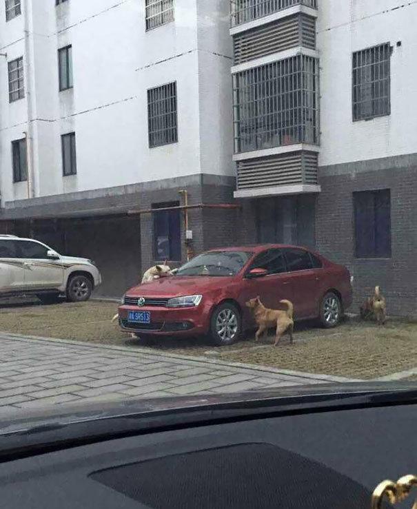 Stray dogs revenge