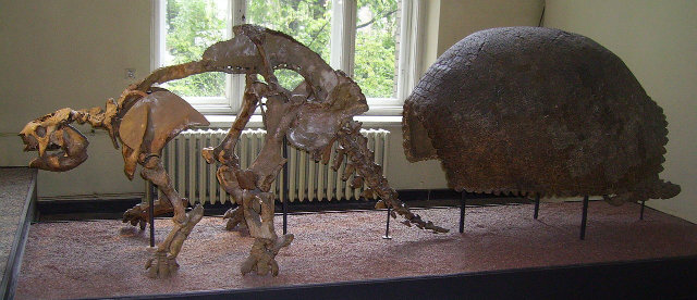 Well-Preserved Fossils, Glyptodon skeleton and shell