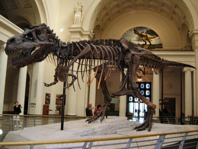 Well-Preserved Fossils, Sue, T-rex