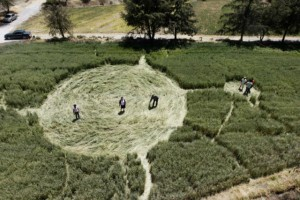 Random Fun Facts, Wallabies getting high and creating crop circles