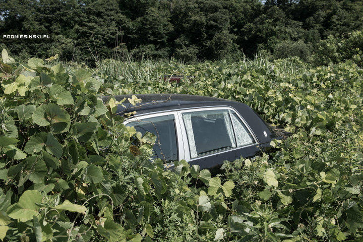 Wild shrubbery surrounding this Japanese car