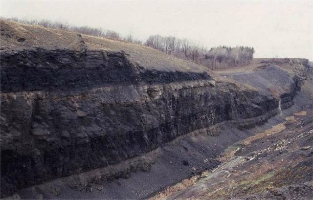 Largest Cockroach Fossil, Ohio Mine