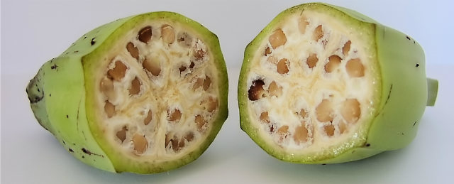 Domestication of Fruits and Vegetables, Wild Banana