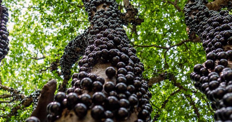 Macam-Macam Tanaman Hortikultura